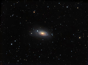 M63 SUNFLOWER