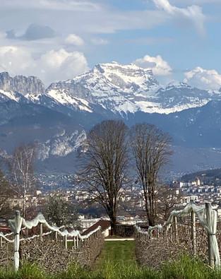 NEW : Domaine des Orchis, Domaine Vallier et Vignes de Paradis, Savoie