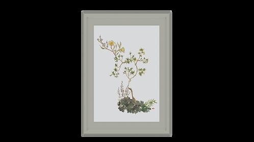 Quiet Bloom Frame