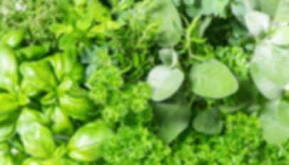 herbs_1050x600.jpg