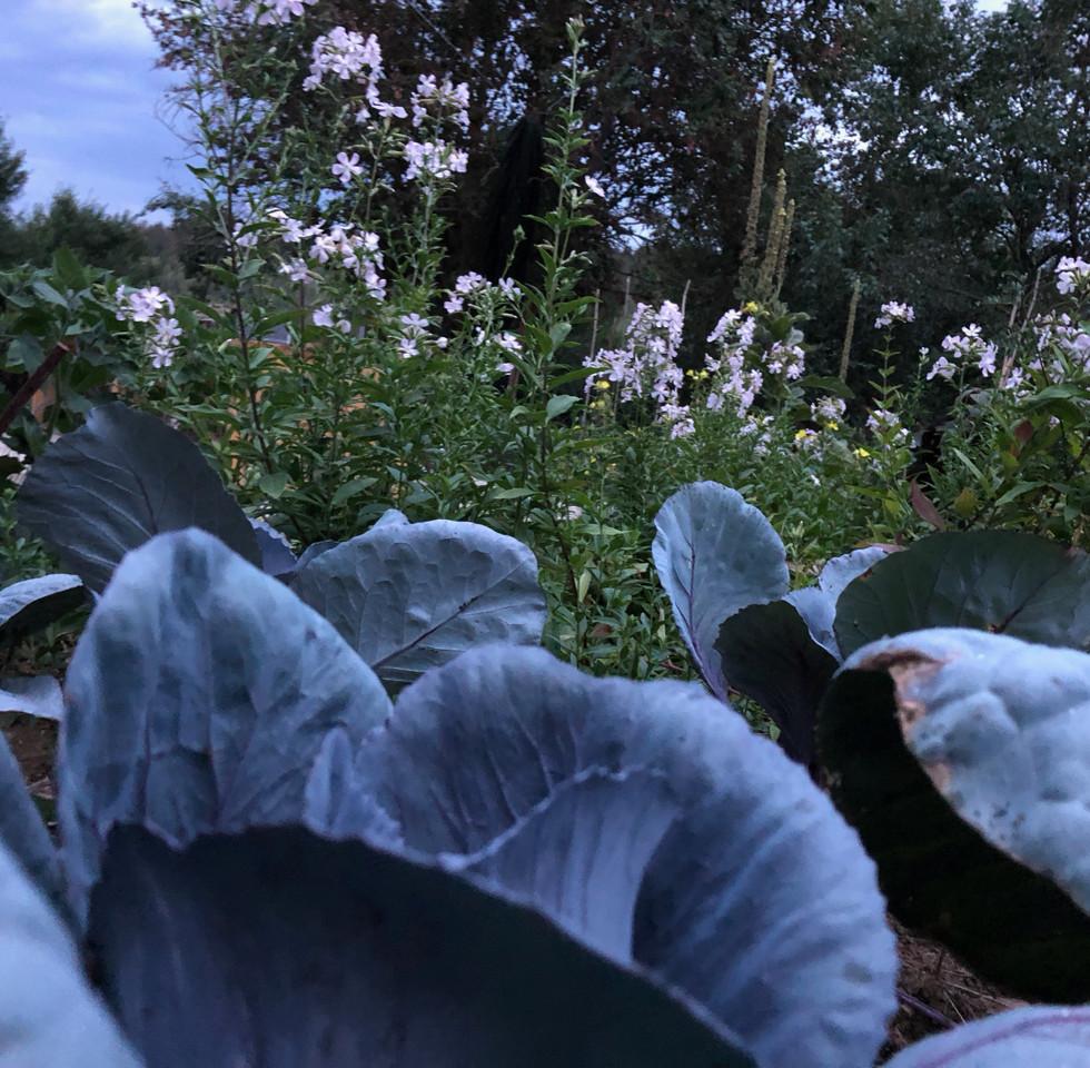 Kohl mit wilden Blumen