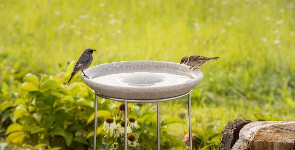 Bird Bath Granicium