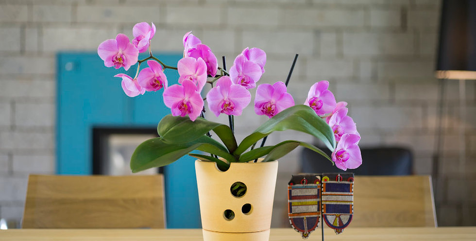 Orchid Pot, 2 pcs