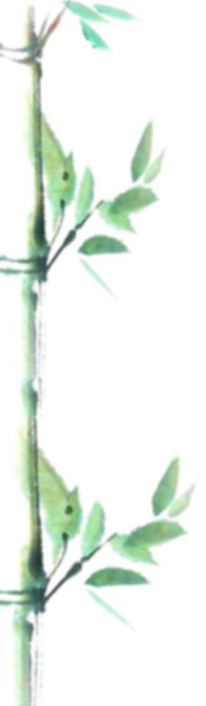 bambú_montaje1.jpg
