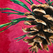 conifer cone
