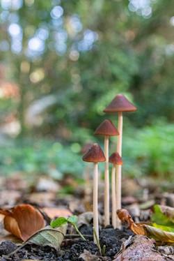 Famille champignons