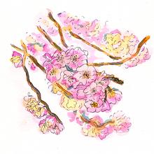 Cerisier.png