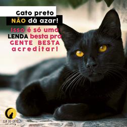 gato-preto.png