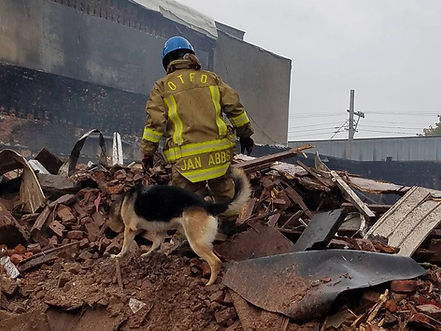 search dog working a fire scene