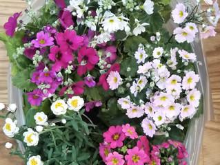 素敵な花たち🌸