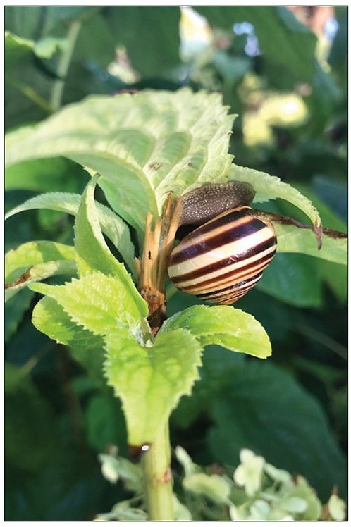 Morning Snail by Diana De Benedictis