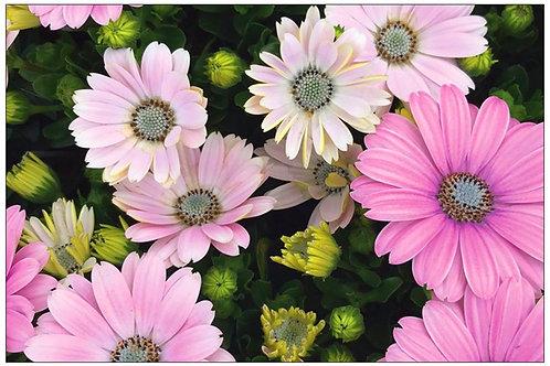 Pink Passion by Diana De Benedictis