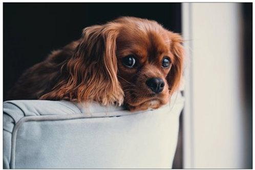 Puppy in a Chair