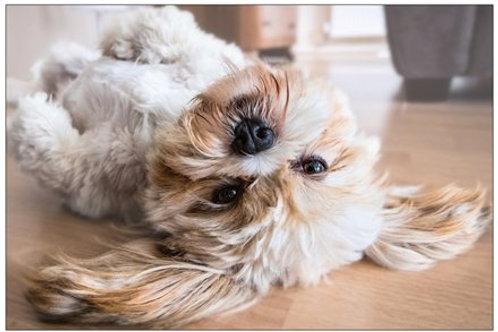 Upside-down Puppy