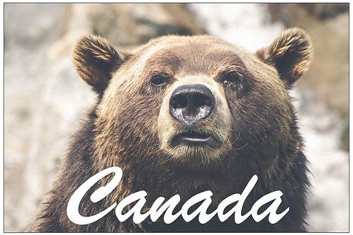 Canada - Bear