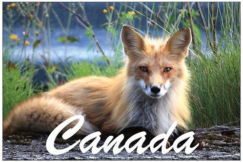 Canada - Fox