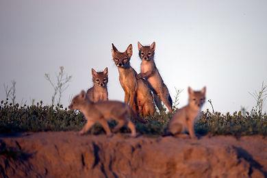 Мама с котятами, на фоне неба, на травве