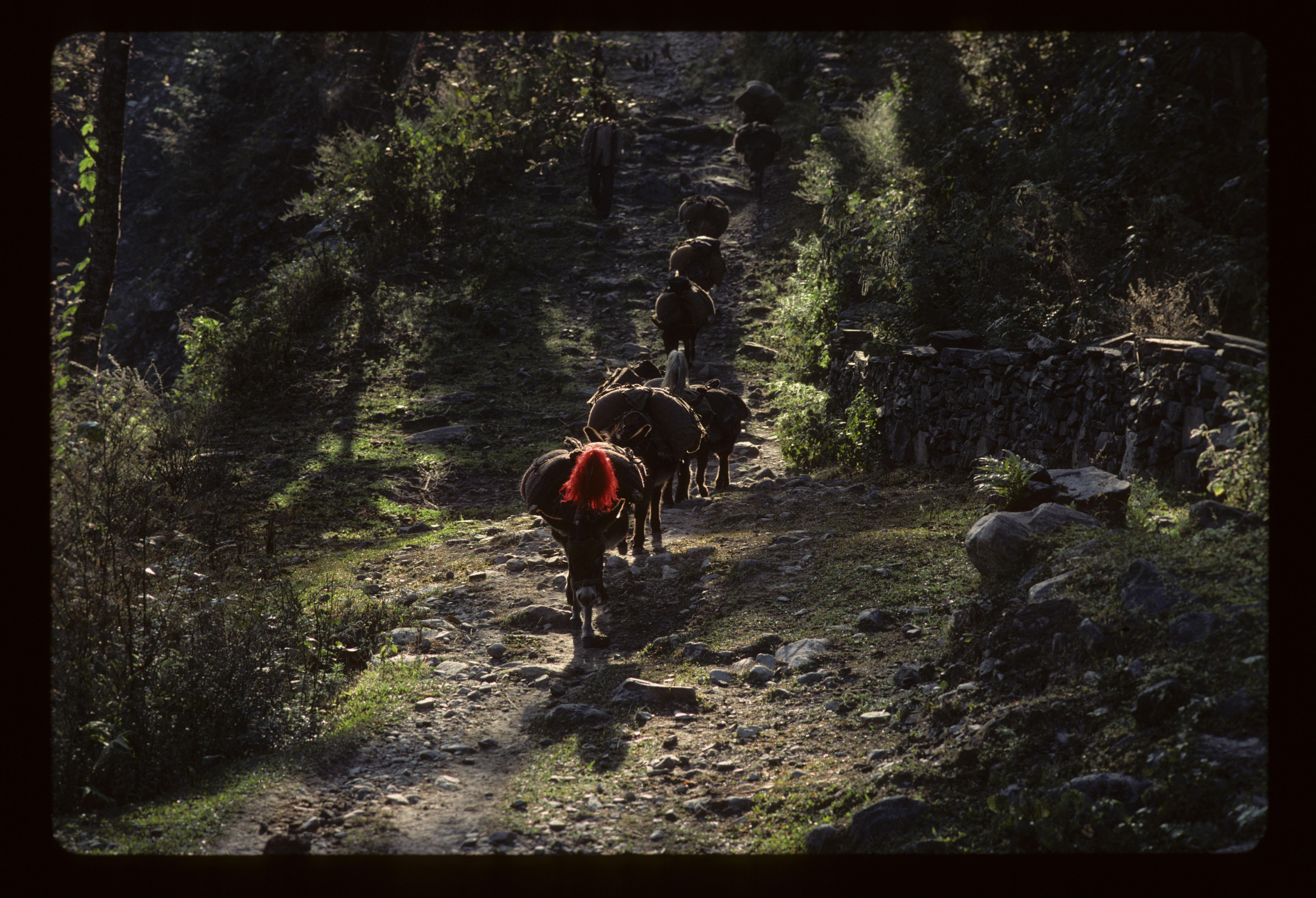 NEPAL 1977 099