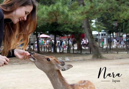 Nara (奈良), la ville des daims