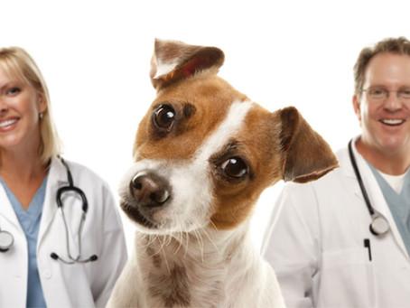 Importância do auxiliar veterinário no mercado pet
