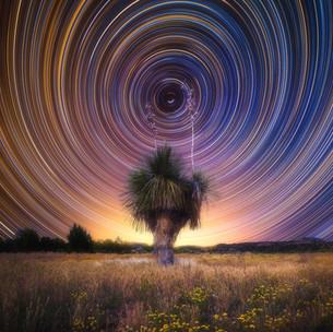 Yucca Star Trails