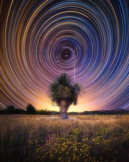 Yucca Stars Trail