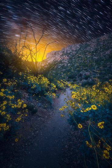 Tucson Path