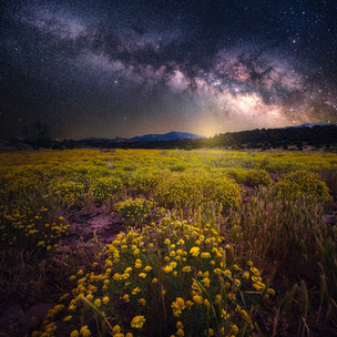 Flowers Under the Stars