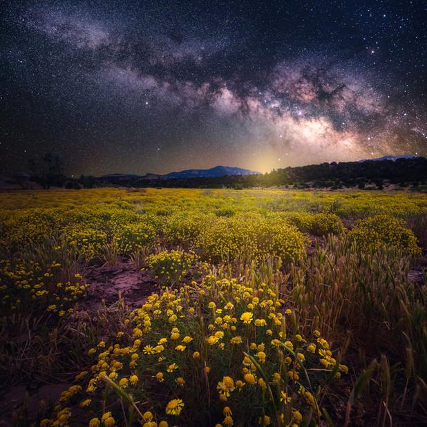 Flowers Under the Stars