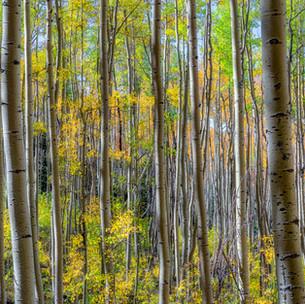 Santa Fe Aspen Wilderness