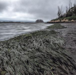 Morrow Bay Remembrance