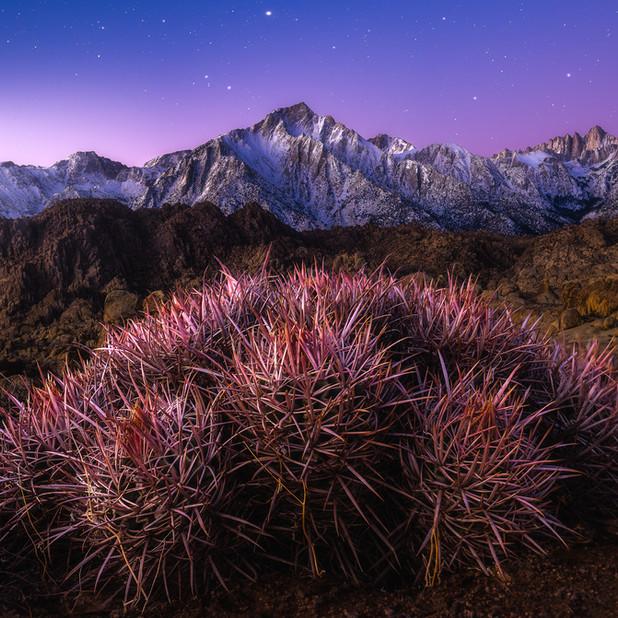 Mt. Whitney Bloom