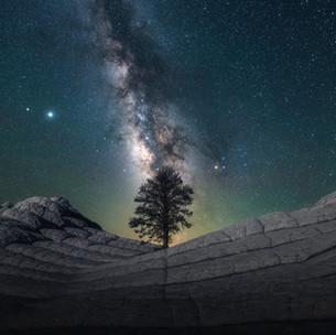 Whitepocket Tree