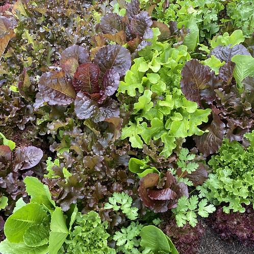 Seasonal Produce in Bulk