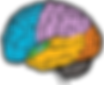 brain png.png