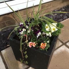 Seasonal planted pots