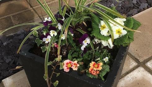 Ready planted pot