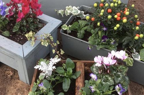 Winter tubs to brighten gardens