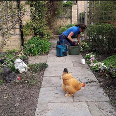 Weeding and flower beds