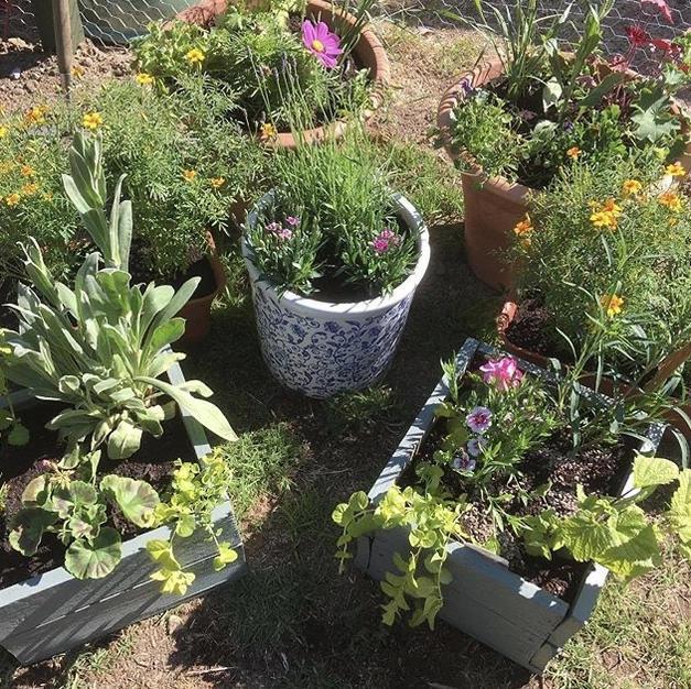 Pre-planted pots