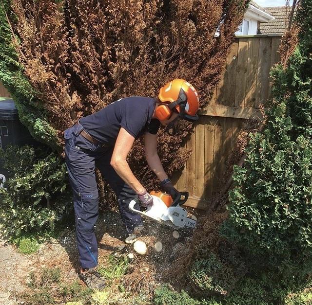 cutting down tree.jpg