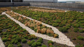 The Benefits of Green Roofs Part 4: The Building's Energy Savings