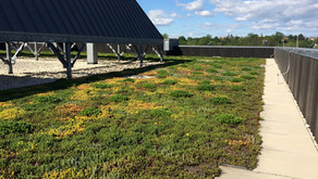 The Benefits of Green Roofs Part 2: Urban Heat Island Effect