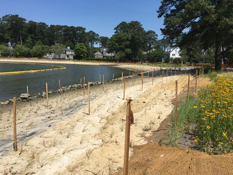 North Shore & Hermitage Living Shoreline Projects