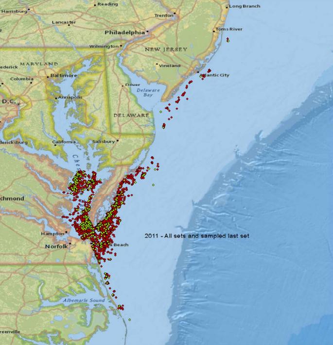 Chesapeake Bay: where Menhaden are harvested