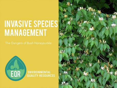 Invasive Species Management | Dangers of Bush Honeysuckle (Lonicera Maackii)