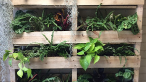 The Many Benefits of Living Walls