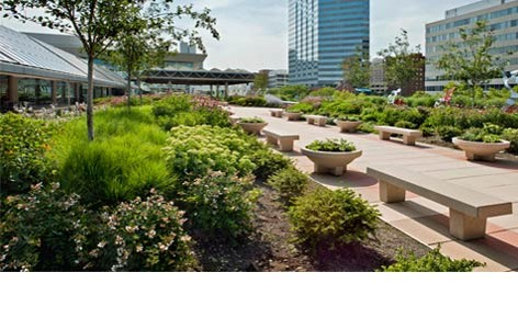 Intensive Green Roof designed with trees, shrubs and amenities