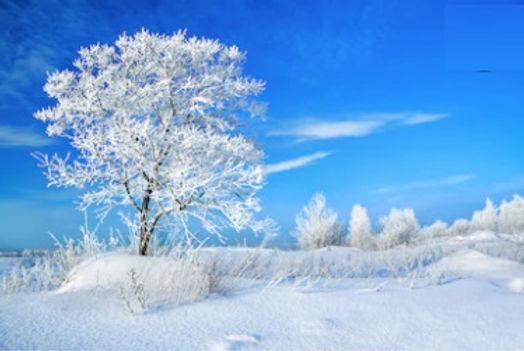 NL_Holidays_BannerBkGd_4_102620.jpg