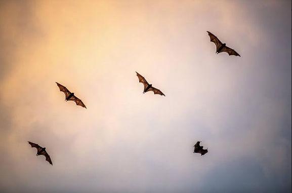 NL_Bats_1120b.jpg